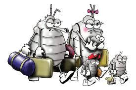 lice cartoon 2